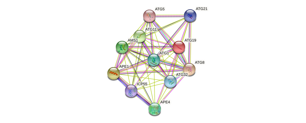 ATG19 protein (Saccharomyces cerevisiae) - STRING interaction network