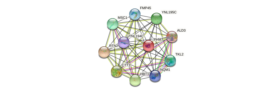 PHM7 protein (Saccharomyces cerevisiae) - STRING interaction network