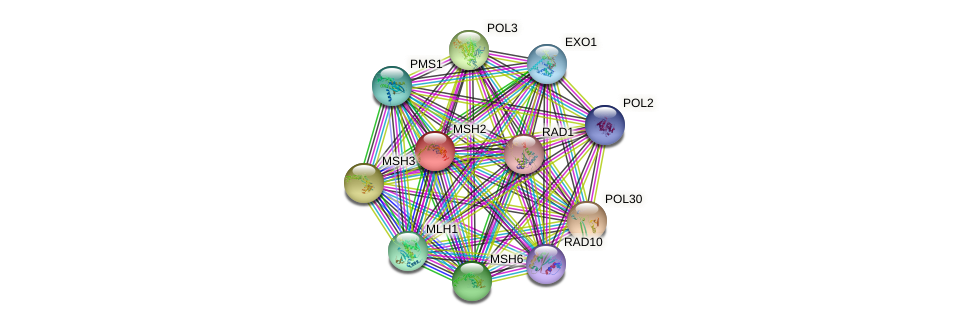 MSH2 protein (Saccharomyces cerevisiae) - STRING interaction network