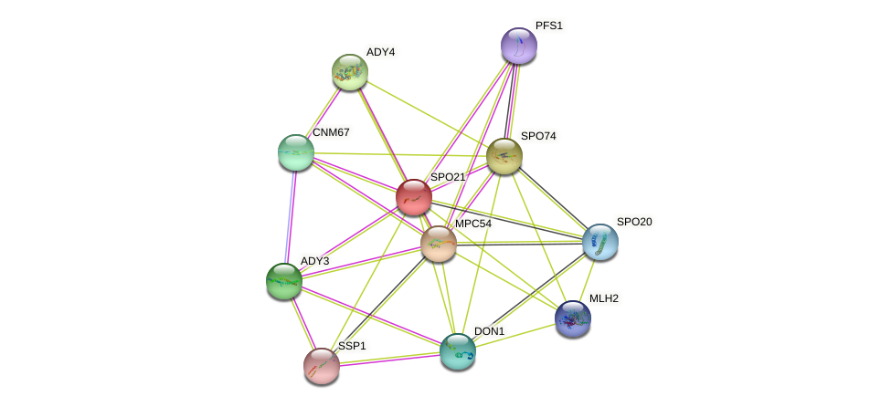 SPO21 protein (Saccharomyces cerevisiae) - STRING interaction network