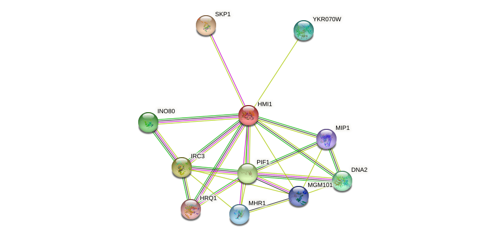 HMI1 protein (Saccharomyces cerevisiae) - STRING interaction network