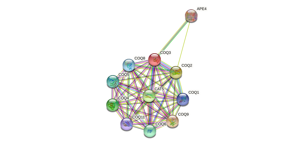 COQ3 protein (Saccharomyces cerevisiae) - STRING interaction network