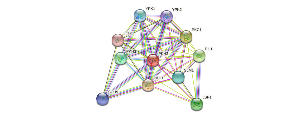 PKH2 protein (Saccharomyces cerevisiae) - STRING interaction network