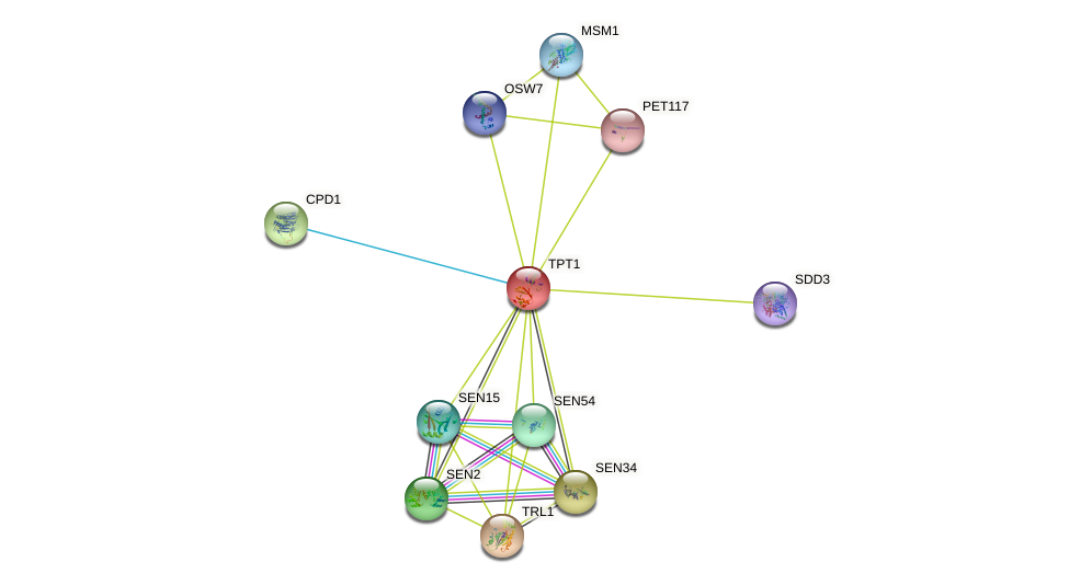 TPT1 protein (Saccharomyces cerevisiae) - STRING interaction network