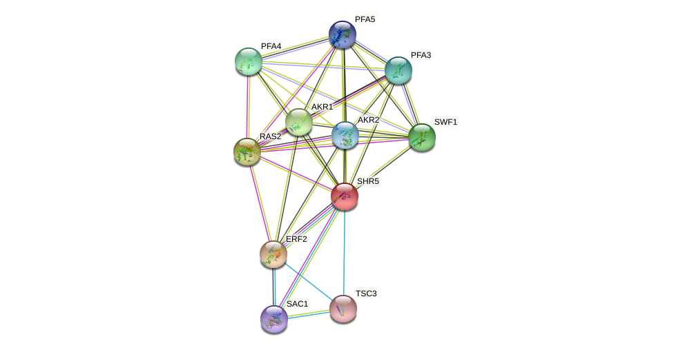 SHR5 protein (Saccharomyces cerevisiae) - STRING interaction network