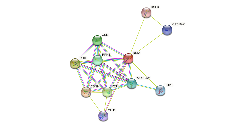 RRI2 protein (Saccharomyces cerevisiae) - STRING interaction network