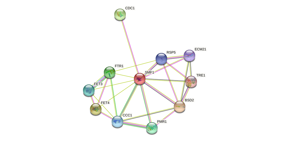 SMF1 protein (Saccharomyces cerevisiae) - STRING interaction network