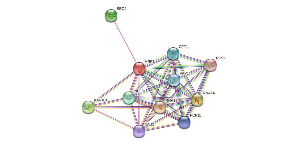 HRP1 protein (Saccharomyces cerevisiae) - STRING interaction network