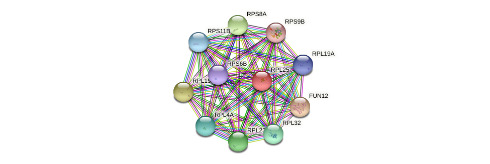 RPL25 protein (Saccharomyces cerevisiae) - STRING interaction network