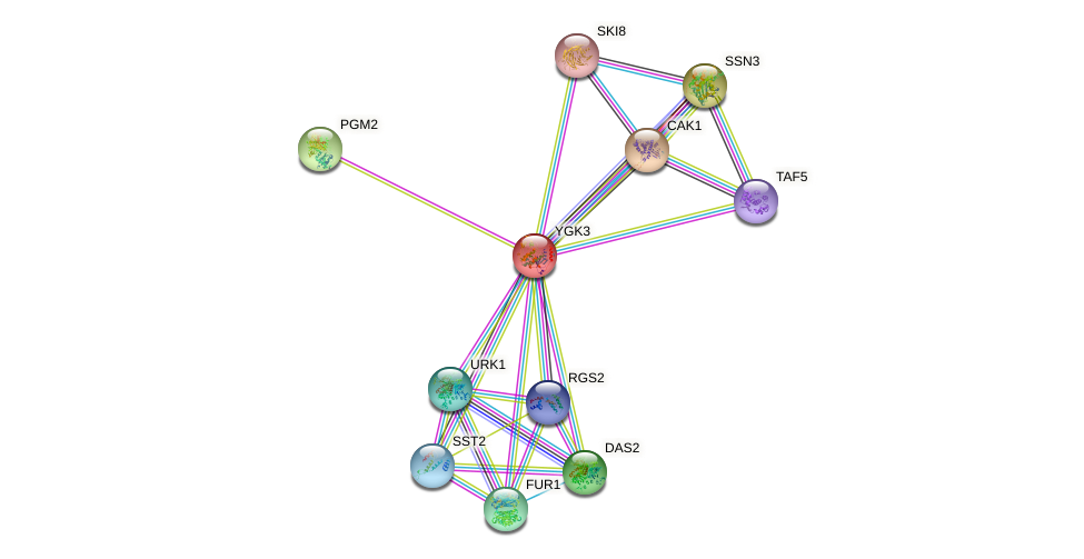 YGK3 protein (Saccharomyces cerevisiae) - STRING interaction network