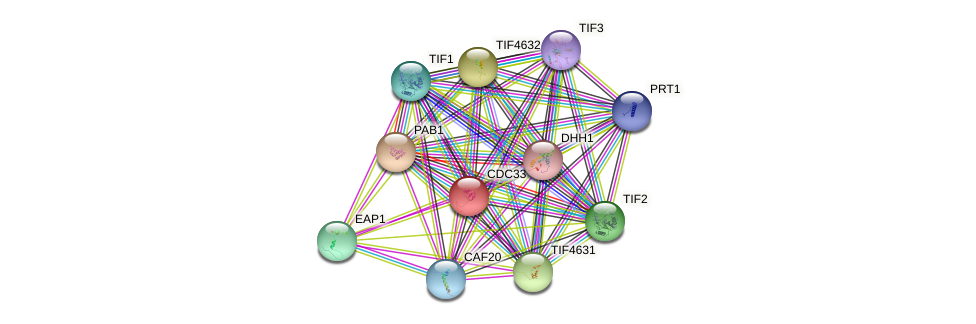 CDC33 protein (Saccharomyces cerevisiae) - STRING interaction network