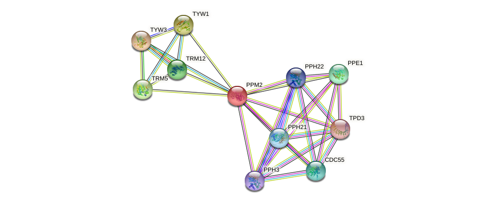 PPM2 protein (Saccharomyces cerevisiae) - STRING interaction network