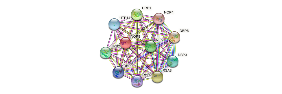 NOP8 protein (Saccharomyces cerevisiae) - STRING interaction network