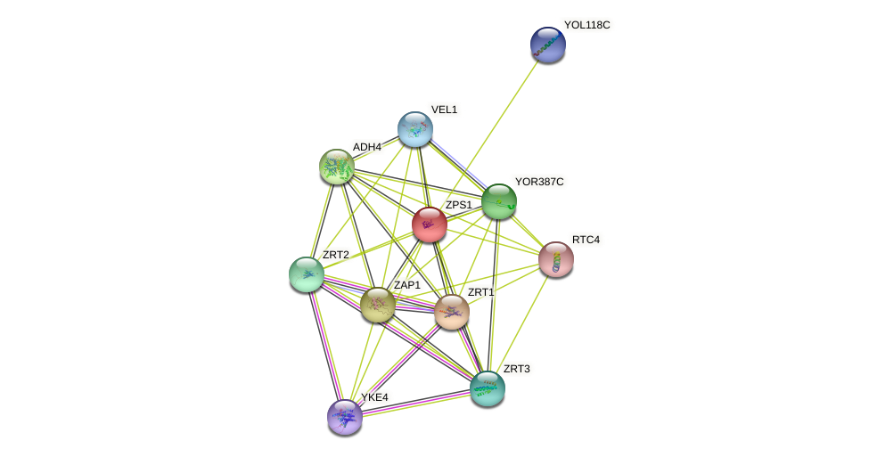 ZPS1 protein (Saccharomyces cerevisiae) - STRING interaction network