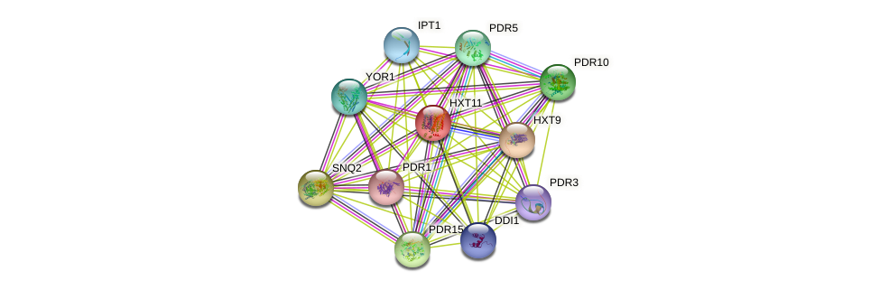 HXT11 protein (Saccharomyces cerevisiae) - STRING interaction network