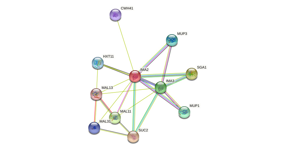 IMA2 protein (Saccharomyces cerevisiae) - STRING interaction network