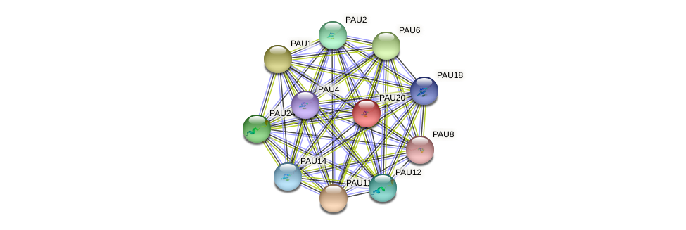 PAU20 protein (Saccharomyces cerevisiae) - STRING interaction network