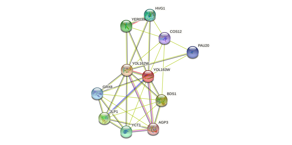 YOL163W protein (Saccharomyces cerevisiae) - STRING interaction network