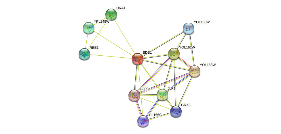 BDS1 protein (Saccharomyces cerevisiae) - STRING interaction network