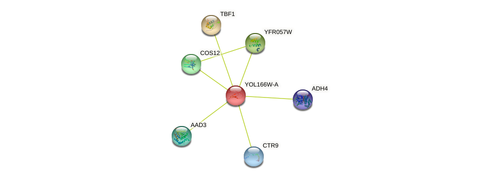 YOL166W-A protein (Saccharomyces cerevisiae) - STRING interaction network