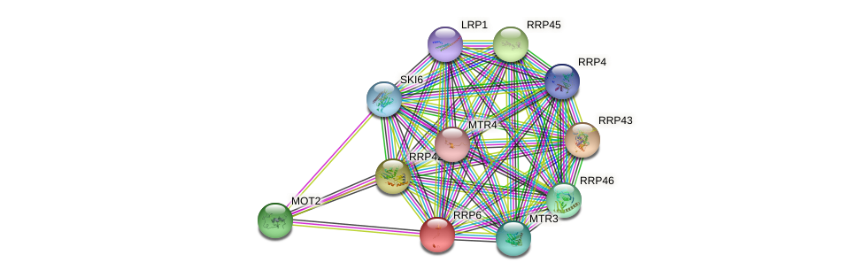 RRP6 protein (Saccharomyces cerevisiae) - STRING interaction network
