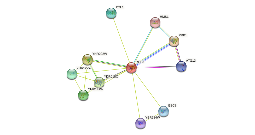 YSP3 protein (Saccharomyces cerevisiae) - STRING interaction network