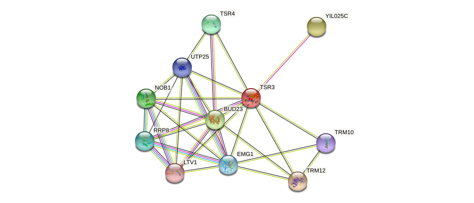 TSR3 protein (Saccharomyces cerevisiae) - STRING interaction network
