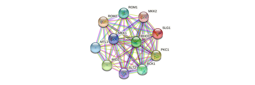 SLG1 protein (Saccharomyces cerevisiae) - STRING interaction network