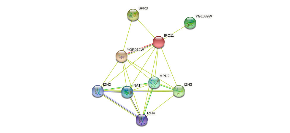 IRC11 protein (Saccharomyces cerevisiae) - STRING interaction network