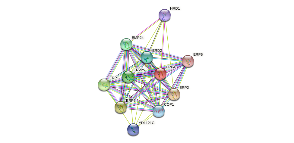 ERP4 protein (Saccharomyces cerevisiae) - STRING interaction network