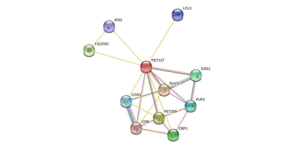 PET127 protein (Saccharomyces cerevisiae) - STRING interaction network