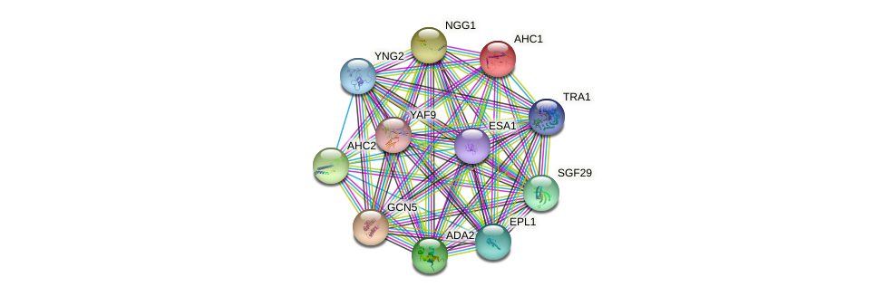 AHC1 protein (Saccharomyces cerevisiae) - STRING interaction network