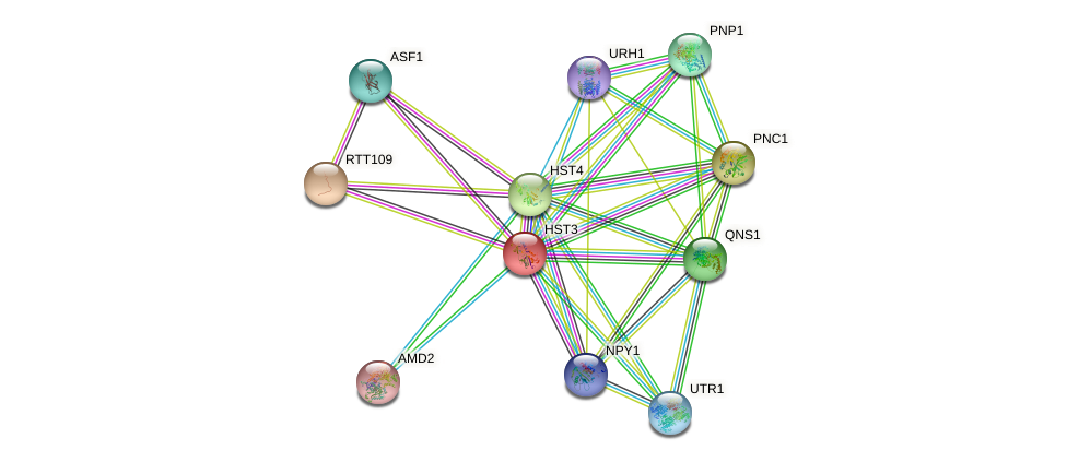 HST3 protein (Saccharomyces cerevisiae) - STRING interaction network
