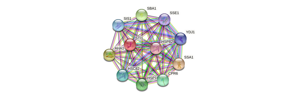 STI1 protein (Saccharomyces cerevisiae) - STRING interaction network