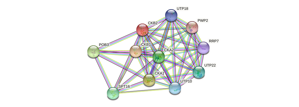 CKB2 protein (Saccharomyces cerevisiae) - STRING interaction network