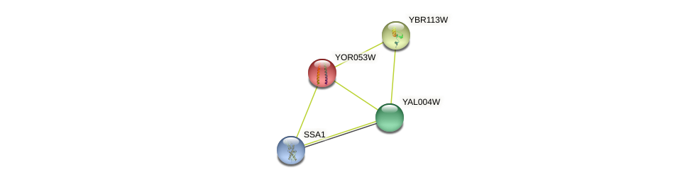 YOR053W protein (Saccharomyces cerevisiae) - STRING interaction network