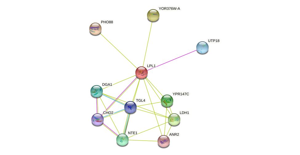 LPL1 protein (Saccharomyces cerevisiae) - STRING interaction network