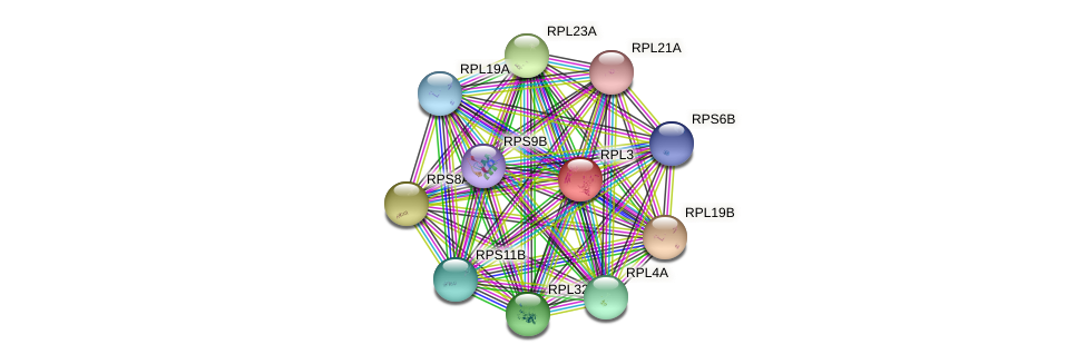 RPL3 protein (Saccharomyces cerevisiae) - STRING interaction network