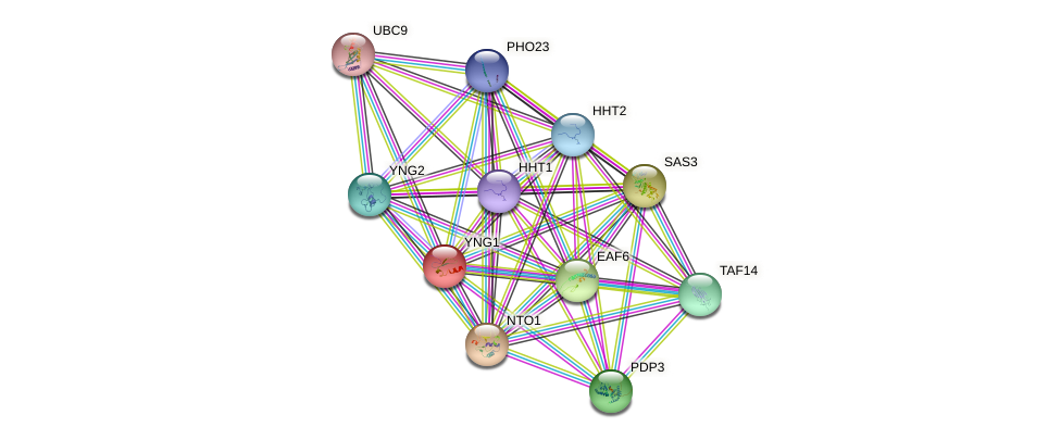 YNG1 protein (Saccharomyces cerevisiae) - STRING interaction network