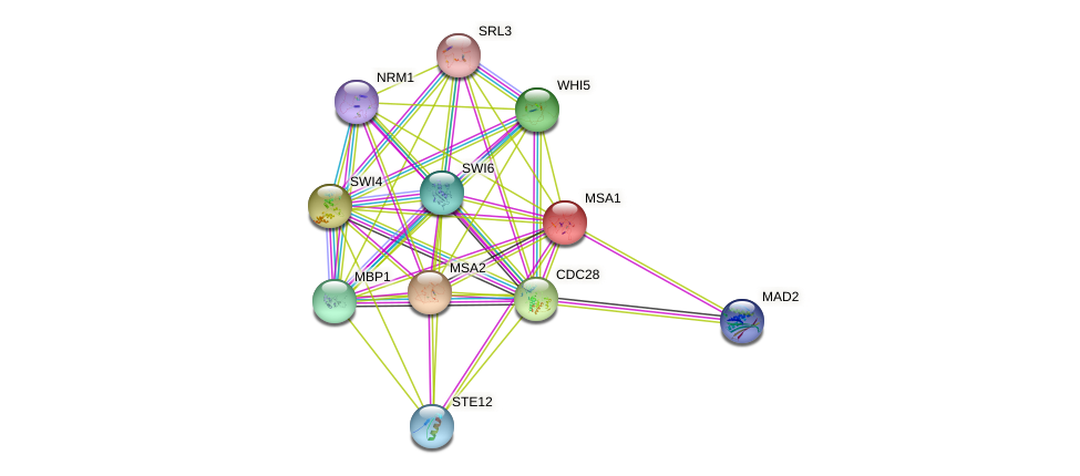 MSA1 protein (Saccharomyces cerevisiae) - STRING interaction network