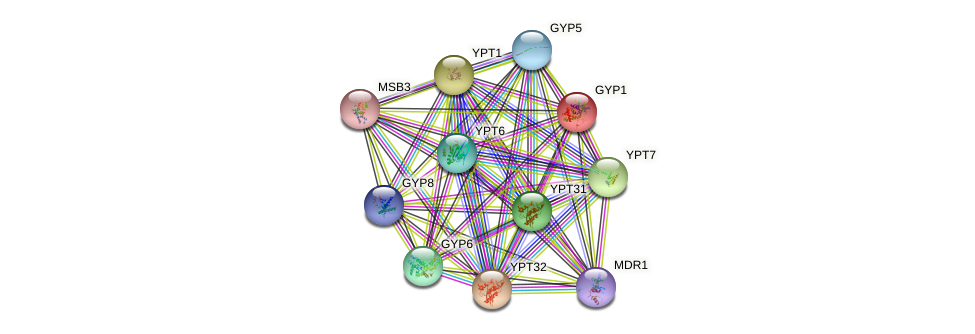 GYP1 protein (Saccharomyces cerevisiae) - STRING interaction network