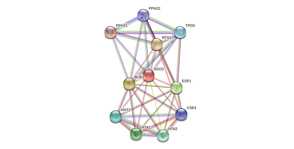 SGO1 protein (Saccharomyces cerevisiae) - STRING interaction network