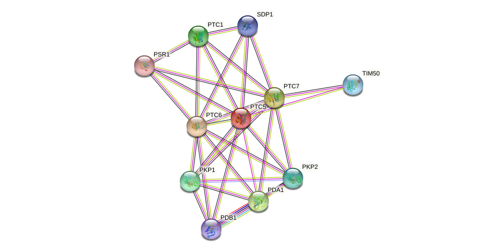 PTC5 protein (Saccharomyces cerevisiae) - STRING interaction network