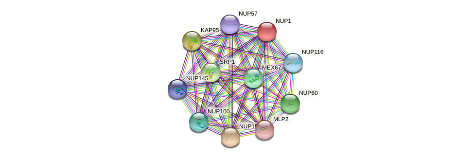 NUP1 protein (Saccharomyces cerevisiae) - STRING interaction network