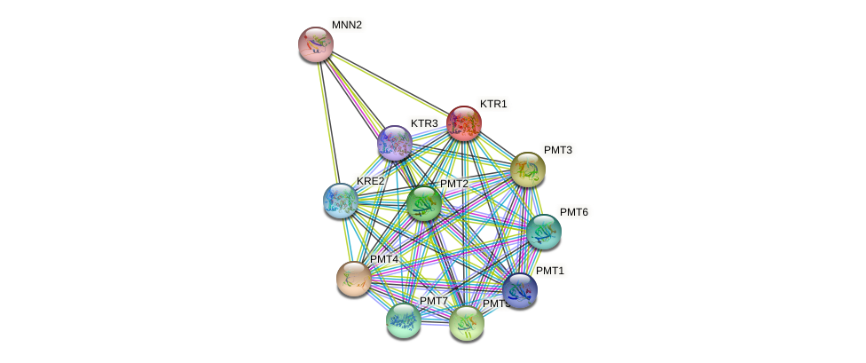KTR1 protein (Saccharomyces cerevisiae) - STRING interaction network