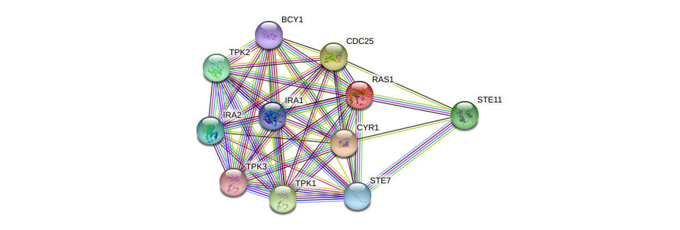 RAS1 protein (Saccharomyces cerevisiae) - STRING interaction network