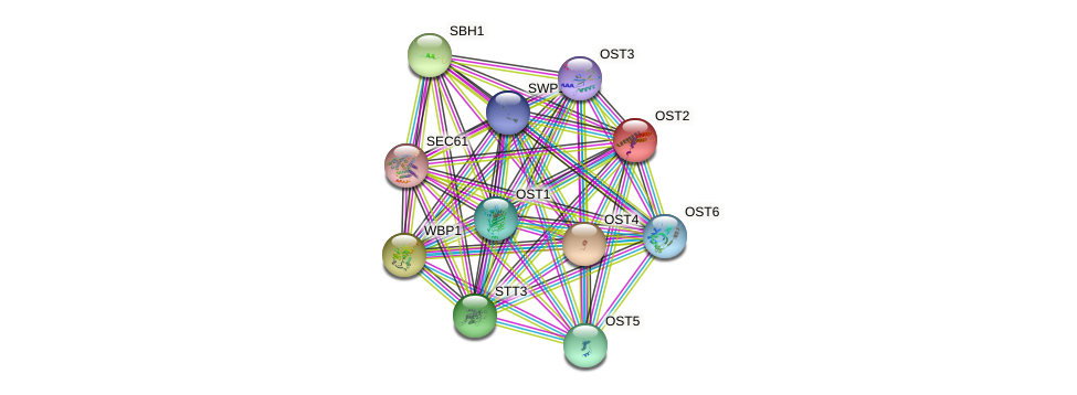 OST2 protein (Saccharomyces cerevisiae) - STRING interaction network