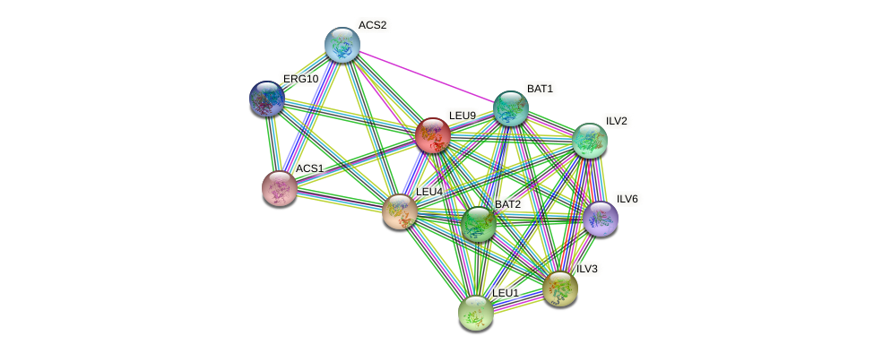 LEU9 protein (Saccharomyces cerevisiae) - STRING interaction network