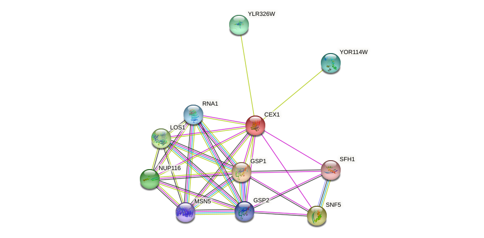 CEX1 protein (Saccharomyces cerevisiae) - STRING interaction network