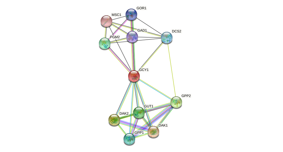 GCY1 protein (Saccharomyces cerevisiae) - STRING interaction network